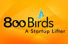 800 Birds Small