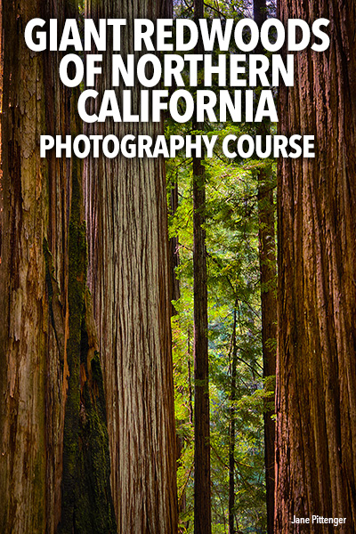 GIANT REDWOODS OF NORTHERN CALIFORNIA PHOTOGRAPHY WORKSHOP