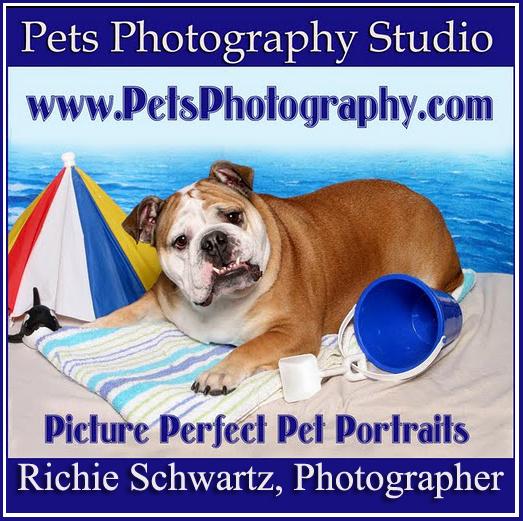 Pets Photography Studio