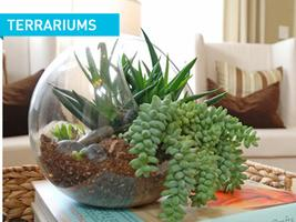 Backyard Skills: Terrariums