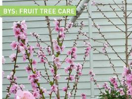 Backyard Skills: Fruit Tree Care