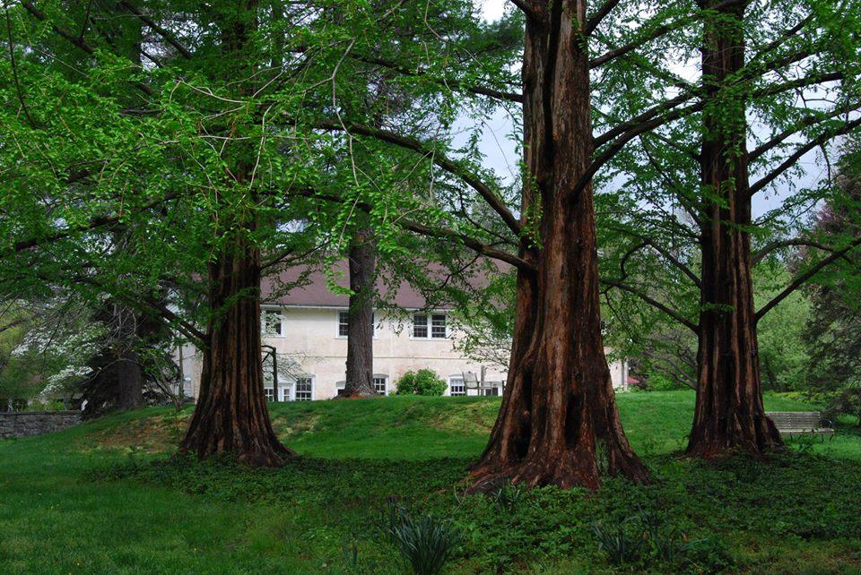 Meditation & spiritual retreat with Amy Edelstein