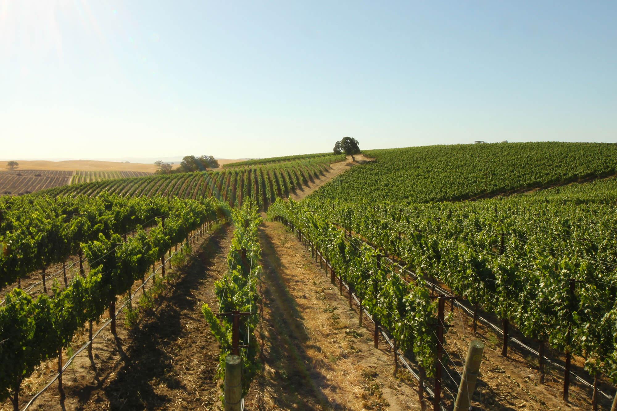 Niner Wine Estate Bootjack Dune