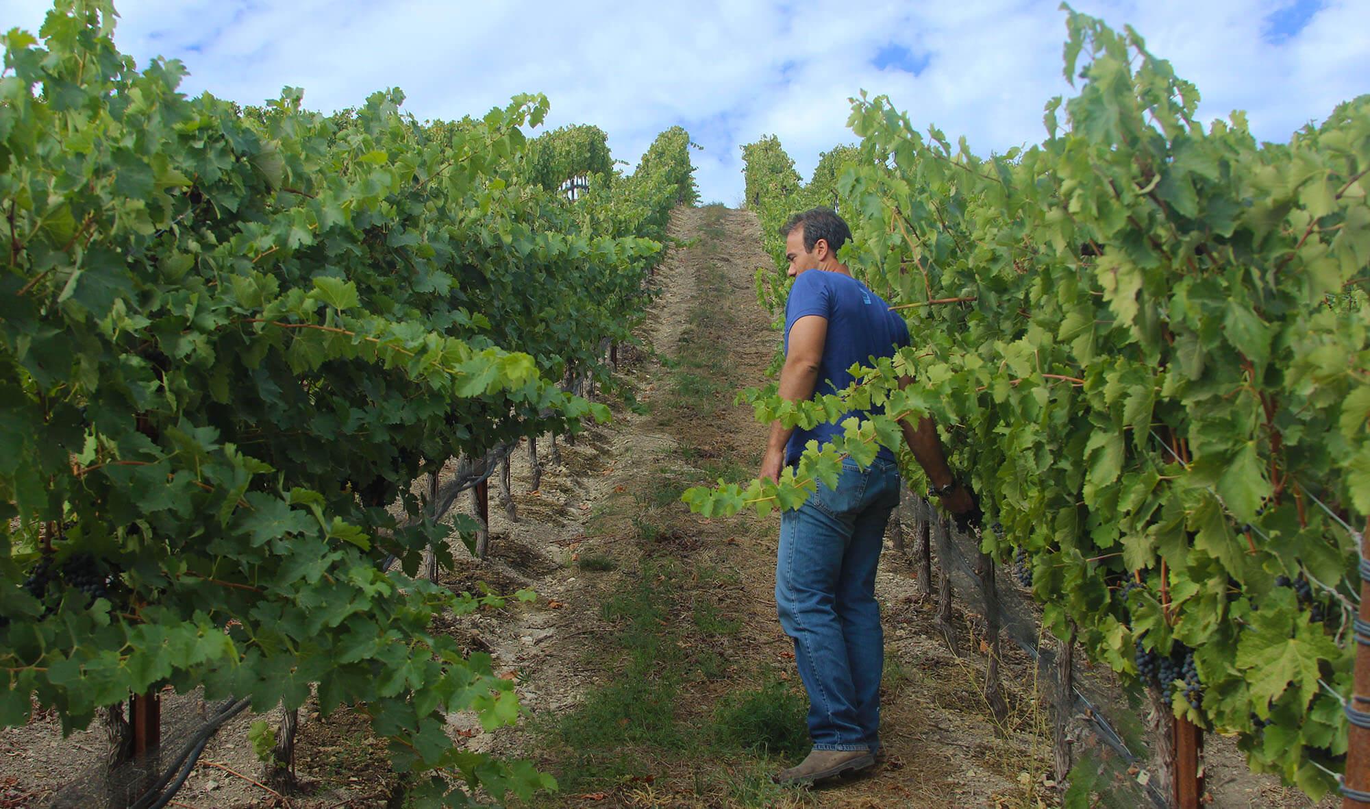 Patrick Niner Wine Estate Vineyard