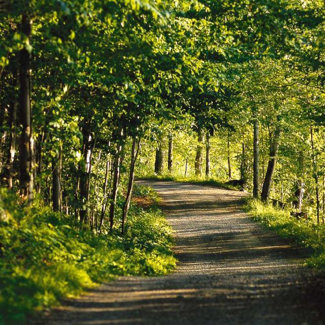 Parc Mont-Saint-Bruno