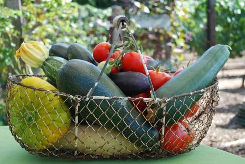 Rustic wire basket full of summer kitchen garden produce.