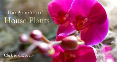 FREE ORCHID WORKSHOP