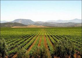 Baja Wine Country Tour