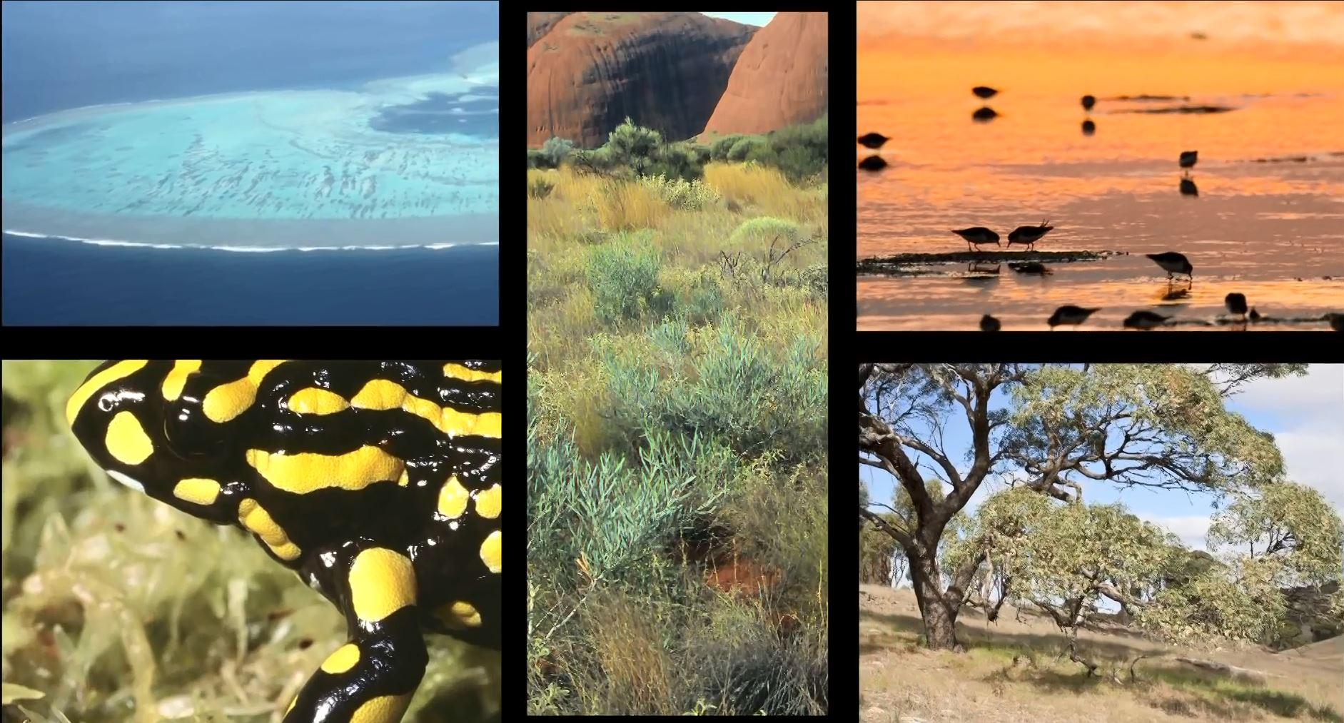 Australian Biodiversity Month