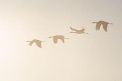Monte Vista Crane Migration Photography Tour
