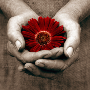 Holding a flower to symbolize giving.