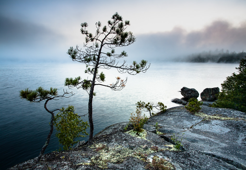 tress by the shore in Temagami