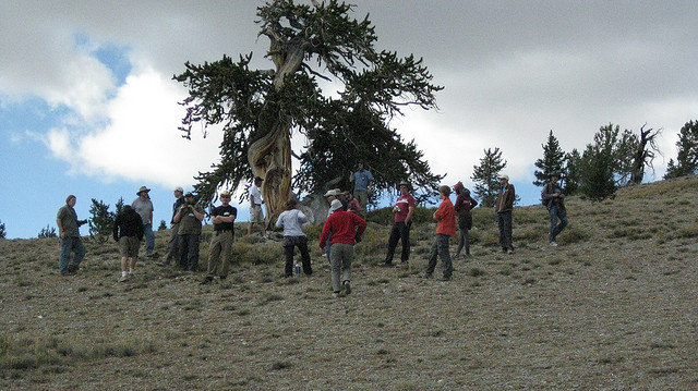 Long Now team gather around a bristlecone