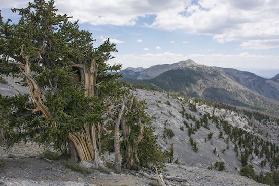 Scotty Strachan at The Interval bristlecone pine view Great Basin