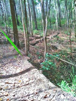 tip trail 2