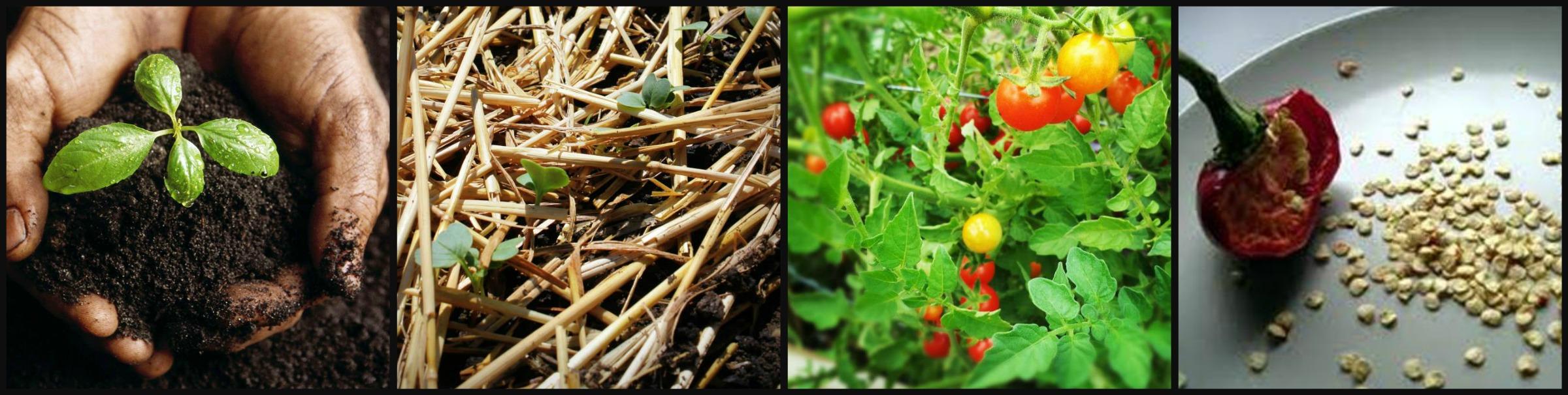 organic garden class collage