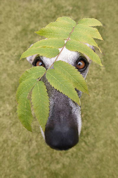 Cambrian Photography - Elke Vogelsang