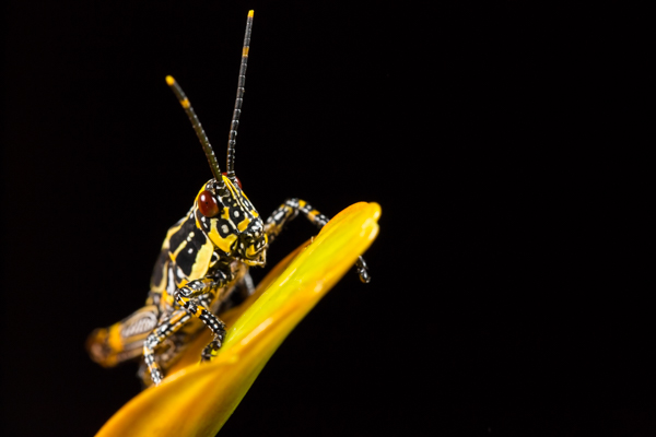 Cambrian Photography Macro Workshop