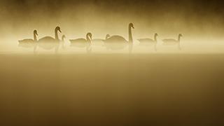 Tesni Ward Cambrian Photography