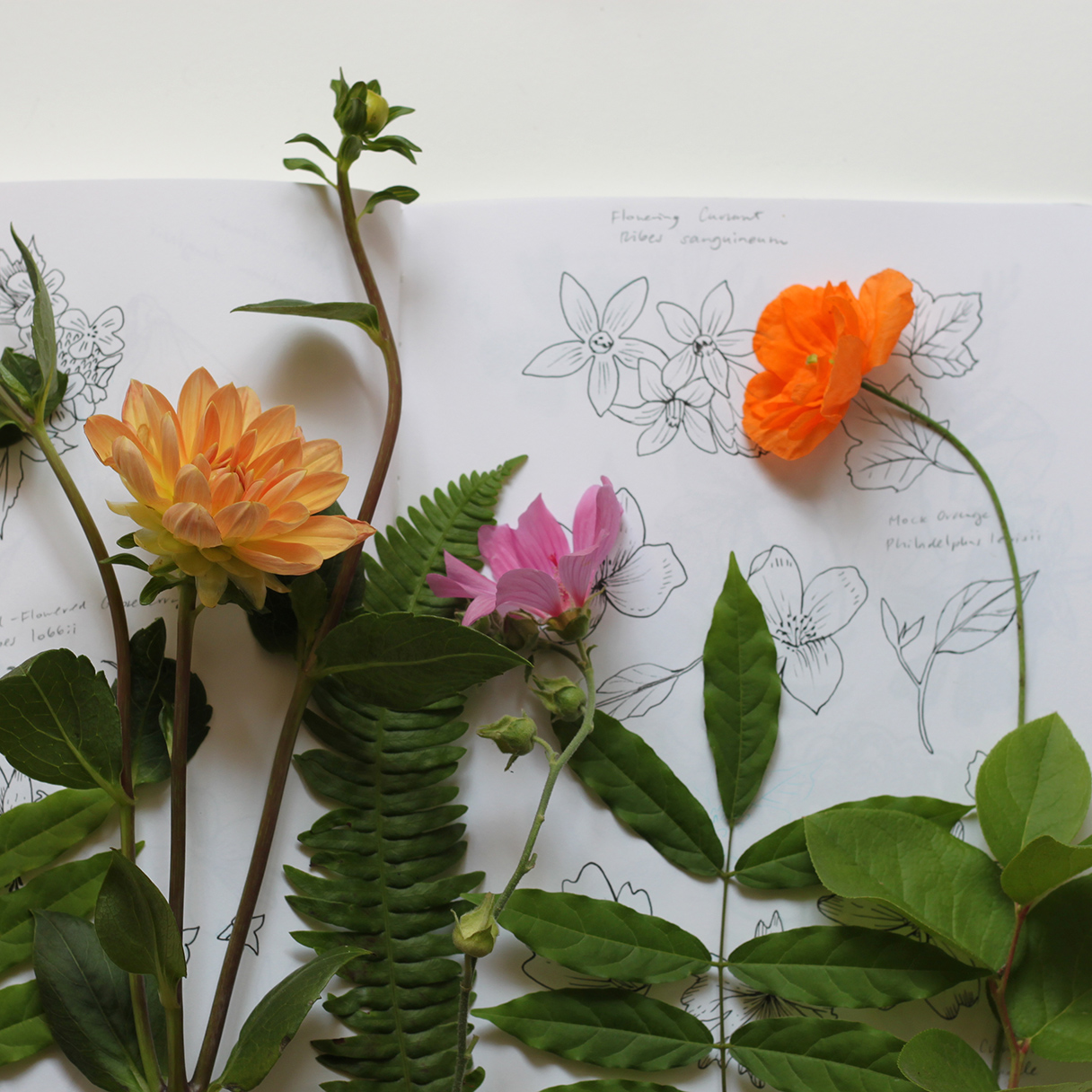 Botanical sketching