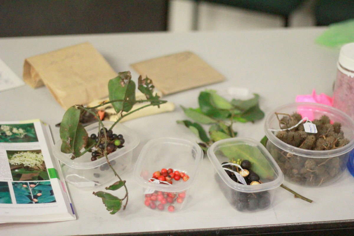 Image from previous Seed Use for Native Vegetation Restoration Workshop
