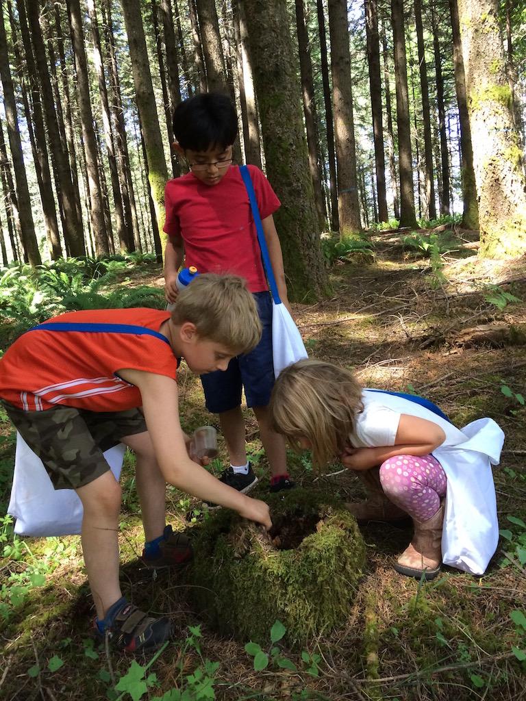 Children looking at ant mound