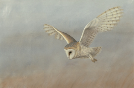 Barn Owl on the Lookout, painted by Robert E Fuller