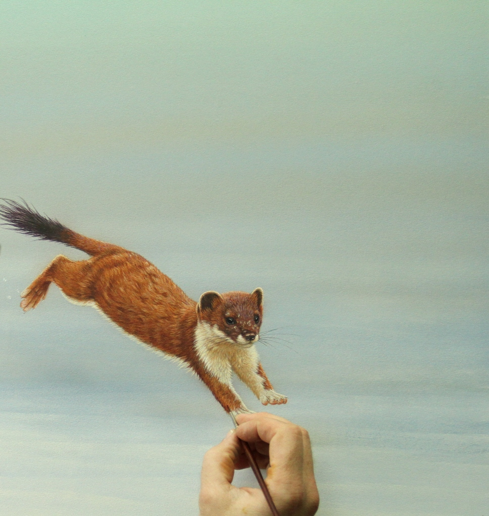 Stoat, painted by Robert E Fuller