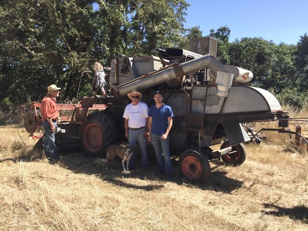 Wright and Brown grain harvest