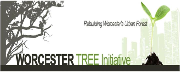Worcester Tree Initiative