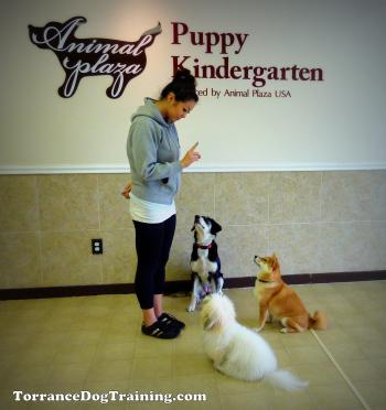 Puppy Kindergarten Dog Training