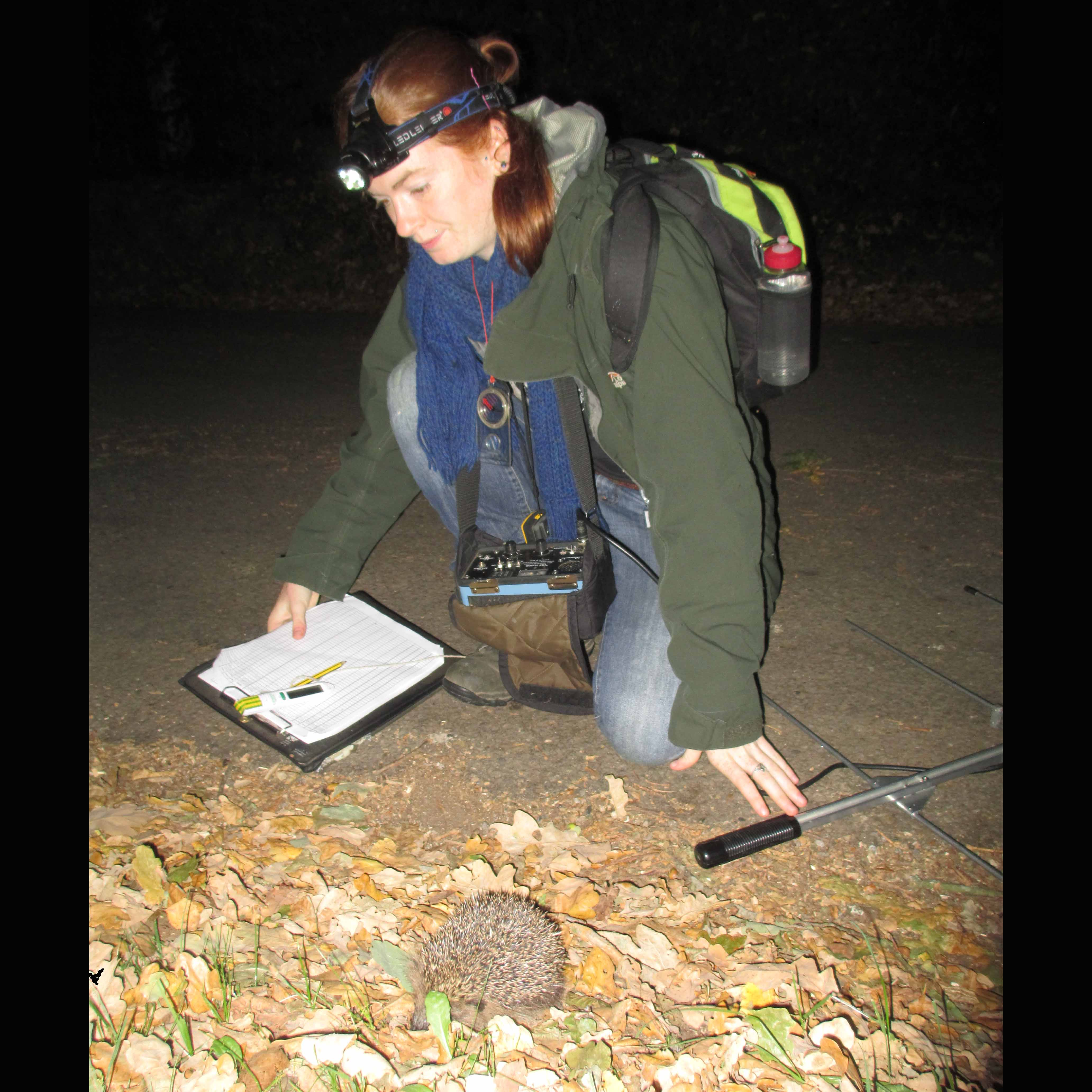 Carly Easby has been radiotracking hedgehogs on arable farmland for her PhD