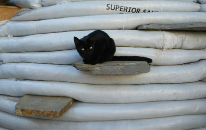 kitty and earthbags