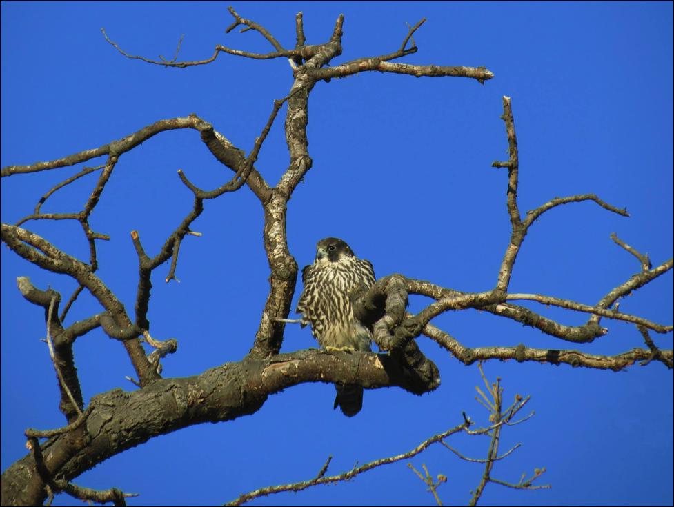 Bird Fort Tilden