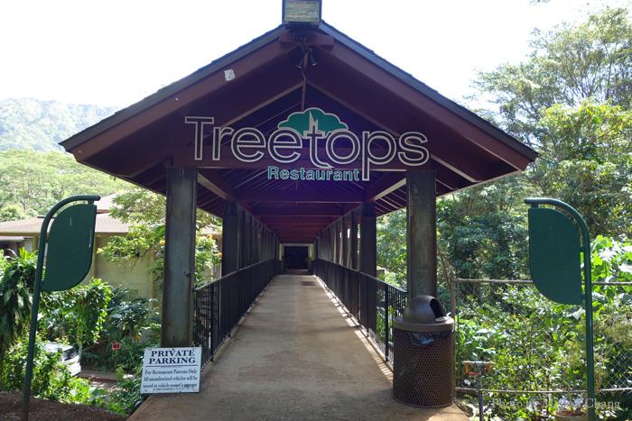 Treetops Frolic HI