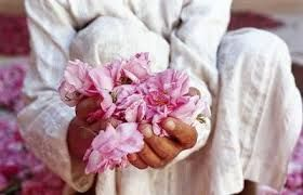 holding roses - Valley of the Roses High Atlas Morocco
