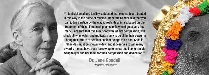 Dr. Jane Goodall Endorses Gods in Shackles