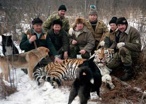 conflict tiger
