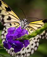 Butterfly perched on purple flower
