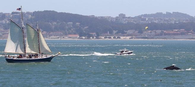 Freda B Golden Gate Whale Watching