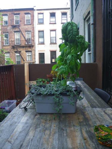 sample DIY hydroponics system