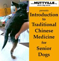 """Introduction to Traditional Chinese Medicine for Senior Dogs""..."
