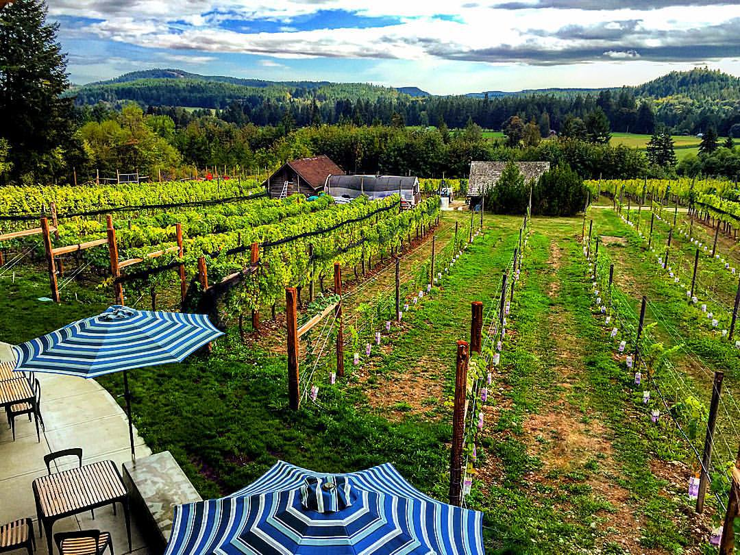 Blue Grouse Winery
