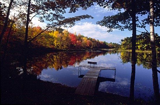 Treehaven pond