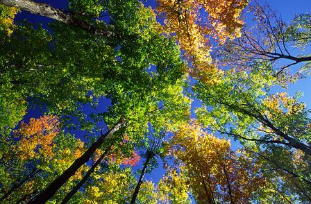 Treehaven