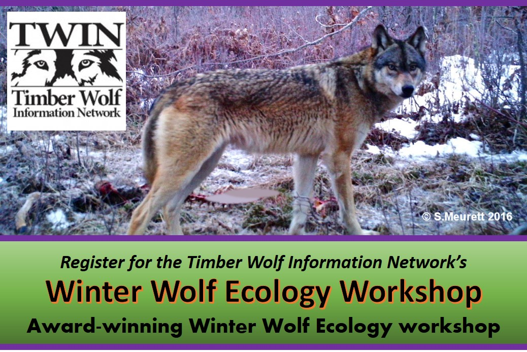 Timber Wolf Information Network's Winter Wolf Ecology Workshop