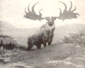 an extinct stag