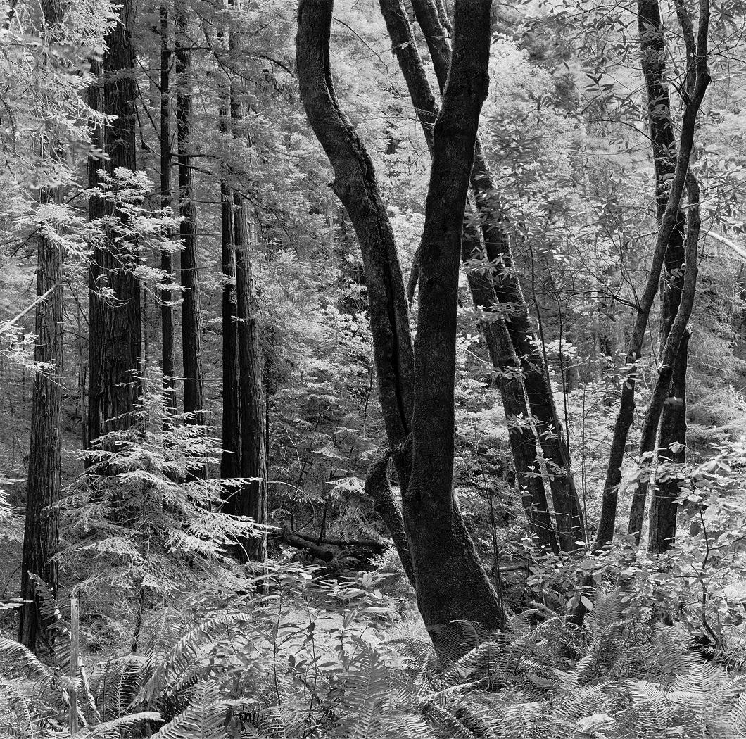 Sacred Grove, 2008, Michael Starkman