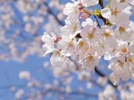 SPU Spring Networking Mixer: Employer Registration