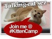 #KittenCamp NYC